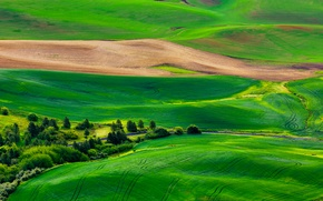 Picture road, field, grass, trees, nature, hills, panorama