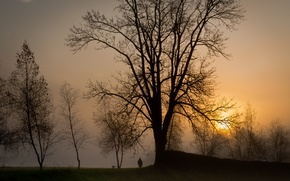 Picture the sun, trees, sunset, fog, people, The evening, dog, walk, silhouettes