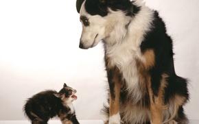 Wallpaper kitty, fright, Dog