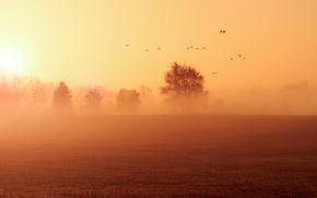 Picture field, landscape, fog, morning