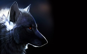 Picture Wolf, black background, amber eyes
