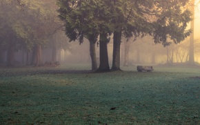 Picture forest, nature, fog, Park, morning, Evan Kemper рhotography