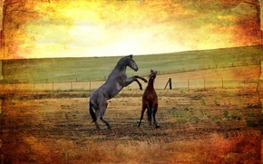 Picture field, style, background, horses