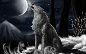 Wallpaper night, the moon, stars, Wolf, North Howl