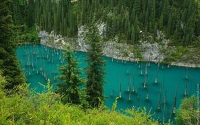 Picture Kazakhstan, Kolsay lakes, lake Kaindy, drowned forest