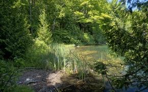 Wallpaper Park, greens, Gatienau Park, the reeds, trees, Canada, pond