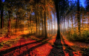 Picture autumn, forest, light, trees, sunset