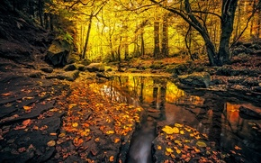 Picture autumn, forest, leaves, trees, stream, stones, yellow