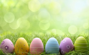 Picture grass, glade, eggs, Easter, flowers, spring, Easter, eggs