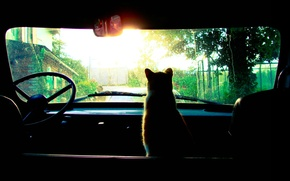 Picture the wheel, car, sitting, red cat