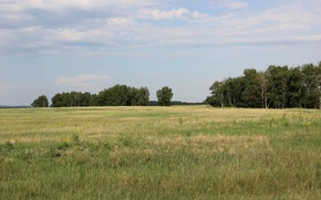 Picture summer, the sky, clouds, yellow, green, heat, horizon, spaces, The steppe, green grass