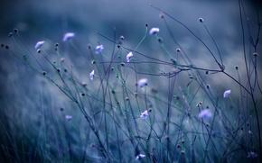 Wallpaper flowers, nature, plants, stems, color, the evening, grass, blue