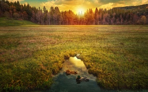 Wallpaper hdr, trees, dawn, duck, field, the sun, the sky, grass, pond, forest