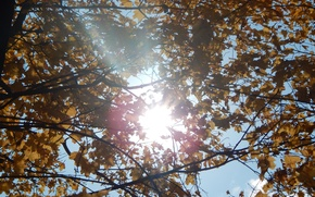Picture autumn, leaves, the sun, branches
