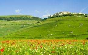 Wallpaper landscape, flowers, nature, hills, field, Maki, home, italia, forest, Italy