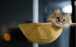 Picture cat, house, lying, Daisy, Ben Torode, Benjamin Torode