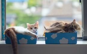 Picture cats, window, box, Daisy, Ben Torode, Hannah, Benjamin Torode