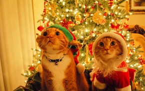 Picture cats, hat, elf, new year, tree, Santa Claus, Kote