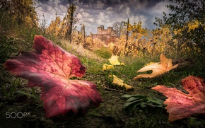 Picture autumn, macro, nature, foliage, fortress, the vineyards