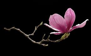 Picture flower, background, branch, petals, garden