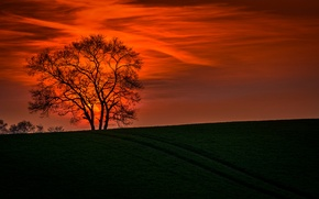 Picture the sky, landscape, sunset, branches, nature, tree
