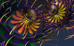 Picture flowers, Wallpaper, petals