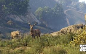 Picture Nature, deer, GTA