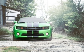 Picture strip, black, green, green, Chevrolet, camaro, chevrolet, the front, Camaro