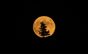 Picture tree, the moon, satellite, silhouette, Eclipse, Moon
