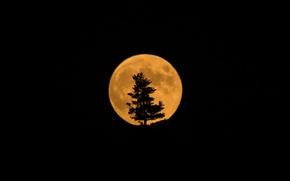 Wallpaper the moon, tree, silhouette, Moon, Eclipse, satellite