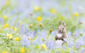 Wallpaper animal, protein, Lost In the Neverland, bokeh, flowers
