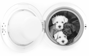 Picture dogs, puppies, black and white, trio, monochrome, washing machine, Trinity