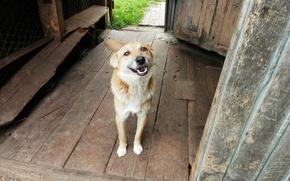 Picture smile, village, dog, dog
