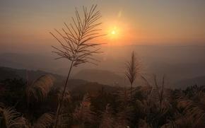 Picture grass, the sun, glare, dawn, plants, panicles