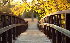 Picture autumn, nature, glare, the bridge, yellow