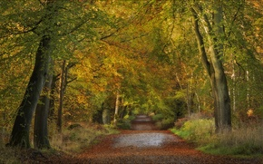 Picture road, autumn, forest, trees, England, England, Wiltshire, Wiltshire, Savernake Forest
