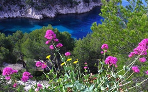 Picture sea, flowers, nature, rocks, Bay