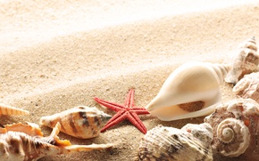 Picture sand, summer, the sun, shore, shell
