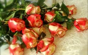 Picture Bud, petals, roses, bouquet