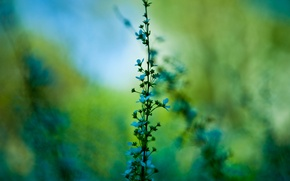 Picture greens, macro, flowers, plant, branch, stem, blue