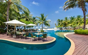 Picture trees, nature, palm trees, pool, The Maldives, table, sun loungers, Maldives