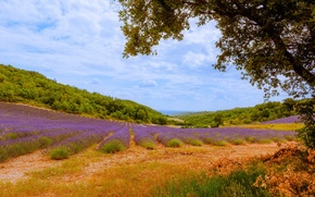 Picture Malijai, France, trees, the bushes, lavender, glade, hills, the sky, clouds