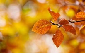 Picture autumn, macro, nature, branch, yellow, Leaves, orange, bokeh