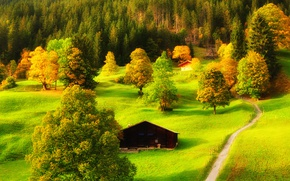 Picture green, trees, way, countryside, path, cabin, hut