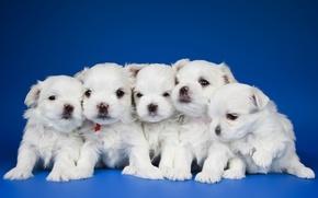 Wallpaper quintet, kids, puppies