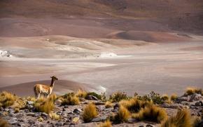 Picture Chile, San Pedro de Atacama, altiplano, Antofagasta, Atacama