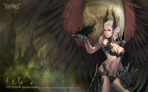 Picture wings, lineage, Black angel