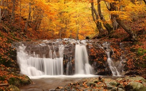 Wallpaper autumn, forest, trees, nature, foliage, waterfall, nature, picture, falling, Autumn waterfall, coloured wood, woodland scenery