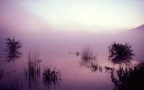 Wallpaper fog, lake, reflection, Grass