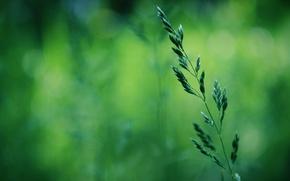 Picture greens, grass, macro, spring, bokeh